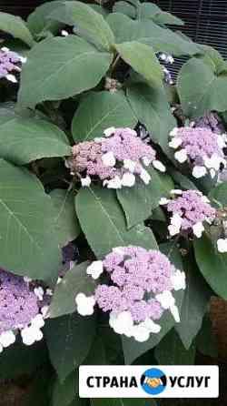 Садовник,агроном по защите растений, ландшафт Одинцово