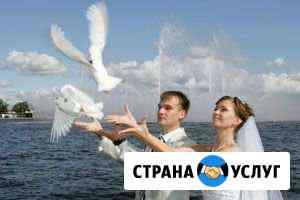 Выпуск голубей на праздничные мероприятия Тюкалинск