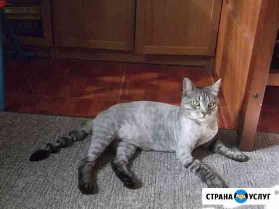Стрижка кошек и собак. Салон красоты для животных Сыктывкар