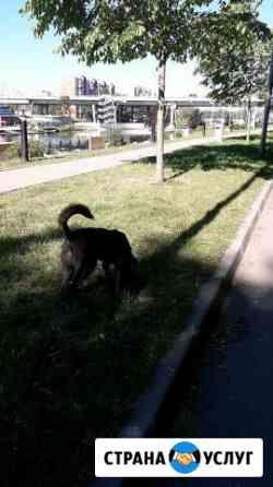 Передержка и выгул собак Калининград