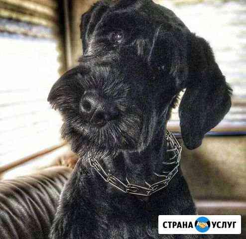 Передержка собак в домашних условиях Новосибирск