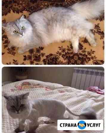 Стрижка кошек и котов Екатеринбург