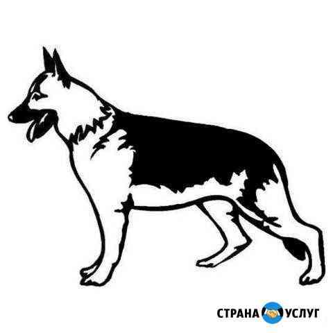 Дрессировка собак Волгоград