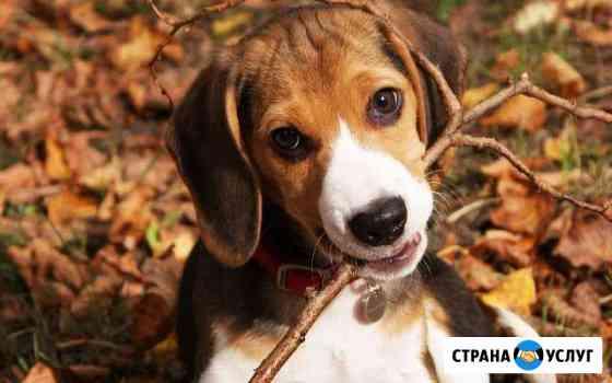 Передержка собак Иркутск