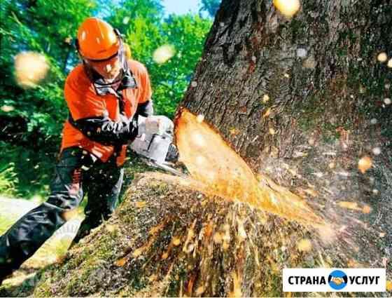 Спил деревьев Тбилисская