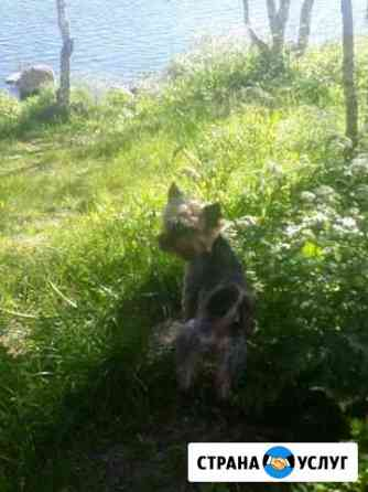 Передержка не крупных животных Мурманск