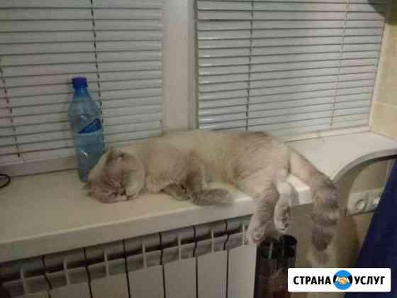 Передержка кошек Махачкала