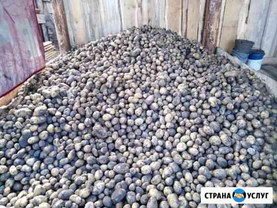 Картофель домашний Иркутск