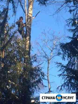 Удаление (спил) деревьев Одинцово