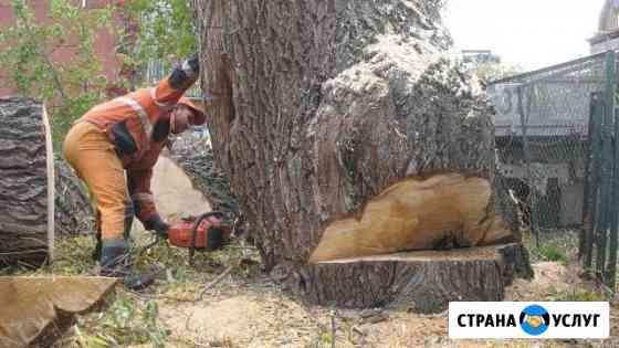 Спил деревьев Новосибирск