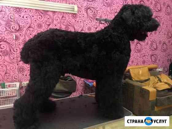 Стрижка животных в Иркутске и Шелехове Иркутск