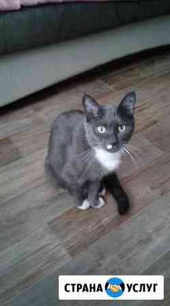 Вязка для кошки Иркутск