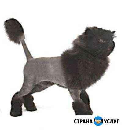 Удобная стрижка кошек Иркутск