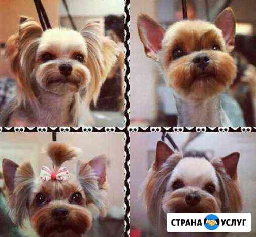 Стрижка кошек,мелких и крупных собак Астрахань