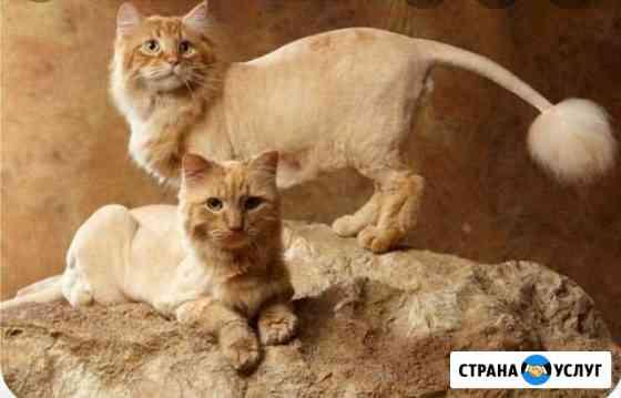 Стрижка собак, груминг кошек Иркутск