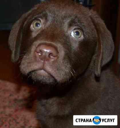Передержка животных(вет.врач в домашних условиях Иркутск