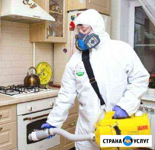 Уничтожение насекомых Комаров Клещей Плесени Астрахань