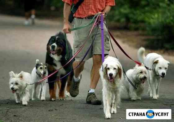 Выгул собак Астрахань