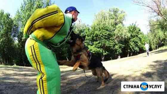 Дрессировка собак Астрахань