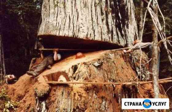 Спил и кронирование деревьев Омск