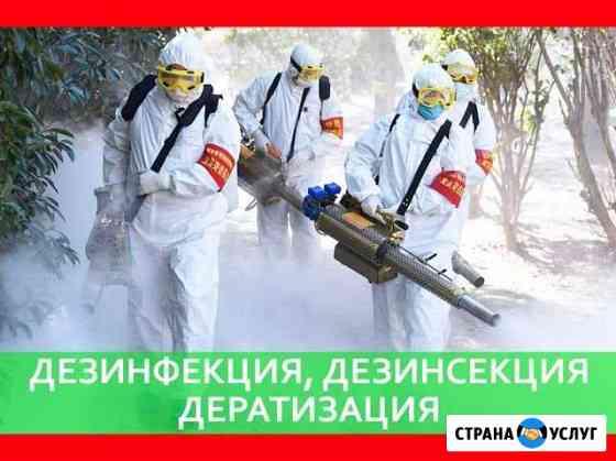 Уничтожение клопов тараканов муравьёв крыс Омск