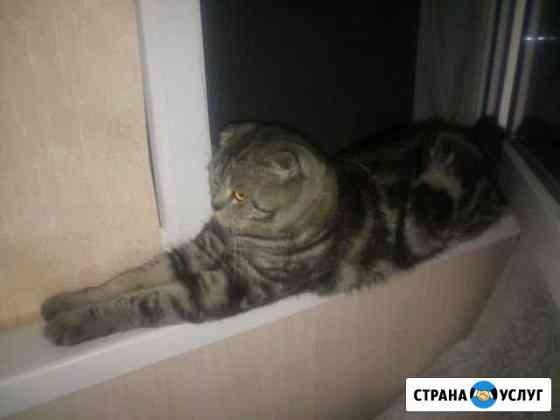 Вязка кот Тема Астрахань