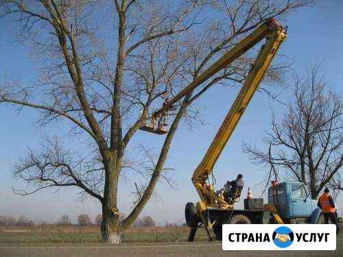 Опиловка, спилить дерево, спил, обрезка деревьев Астрахань