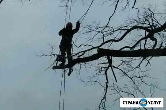 Удаление дерева любой сложности спиливаем деревья Одинцово