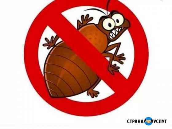 Уничтожение тараканов Иркутск