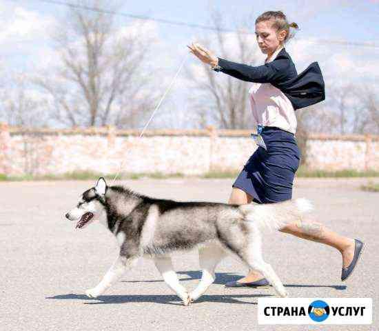 Вязка хаски Астрахань
